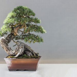 Bonsai and Bonsai material
